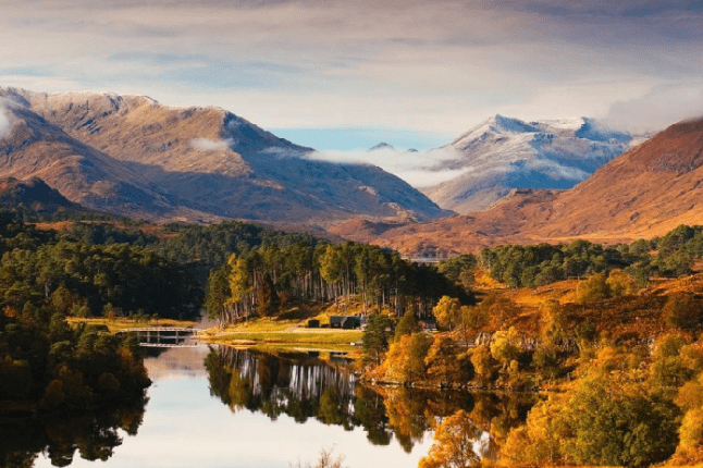 view of some of the 22 million trees planted in Scotland to help meet 'global climate emergency'
