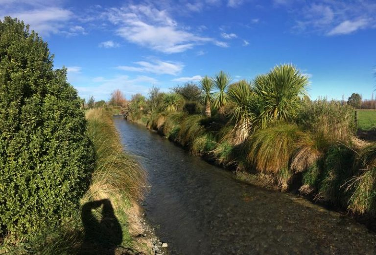 Native plantings long Metheven river improves water quality