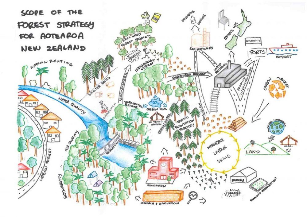 As part of an Environmental Workshop hosted by Te Uru Rākau, this picture was created to give an idea of the elements involved in New Zealand's Forestry Strategy diagram